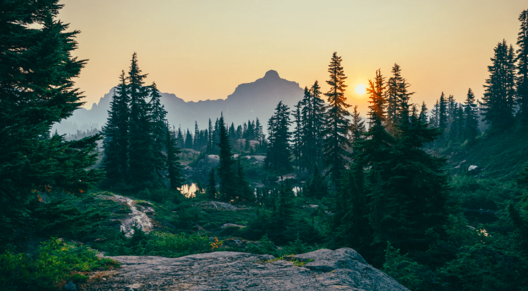 A mountain surrounded by pine trees.